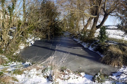 My tiny pond is frozen