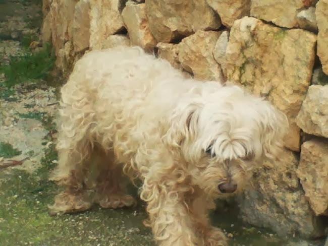 Γνωρίζει κανείς αυτή τη σκυλίτσα;