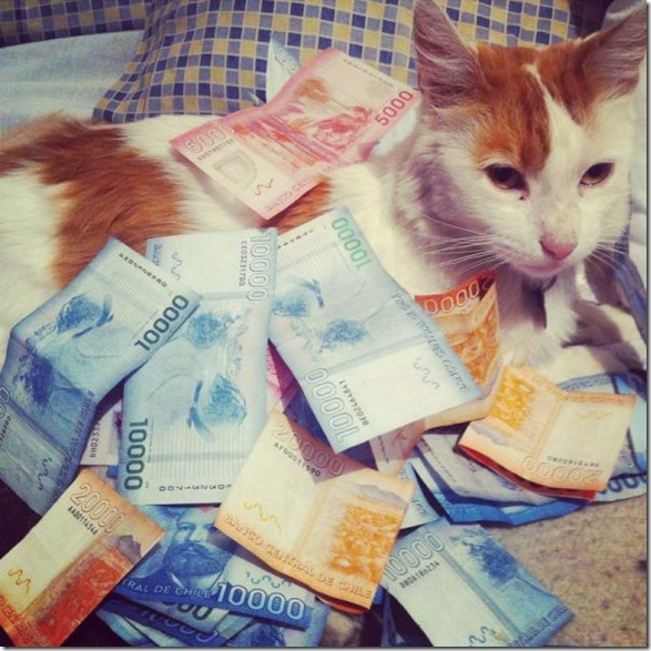 rich-wealthy-cats-23