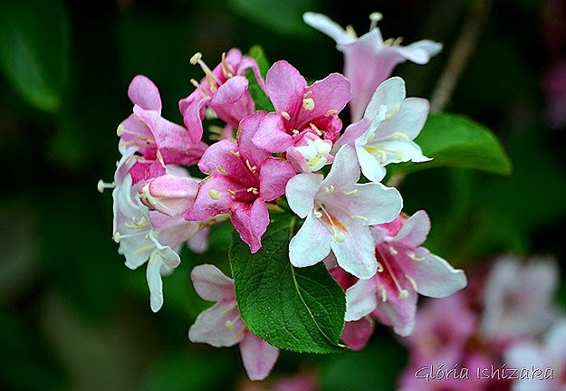 Glória Ishizaka - flor 3