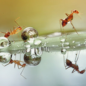 Dew Guardians by Gesit Pinanjaya - Animals Insects & Spiders