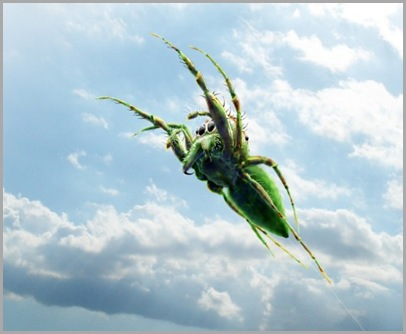 jumping-spider-with-sky-487x399
