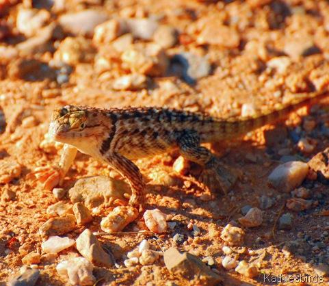 3. lizard-kab