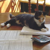Tess helped me do taxes.