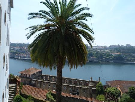 Palmier in Portugalia pe malul raului Douro