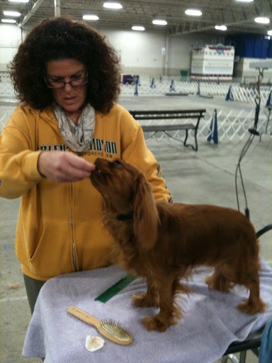 Jan also showed a couple other dogs.  One was a ruby-colored Cavalier King Charles Spaniel, named as such because of their popularity with King Charles and other nobles from the 16th century.