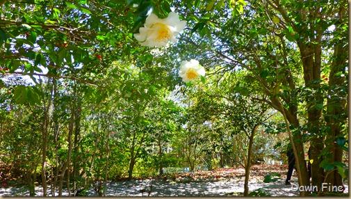 Magnolia Plantation_165