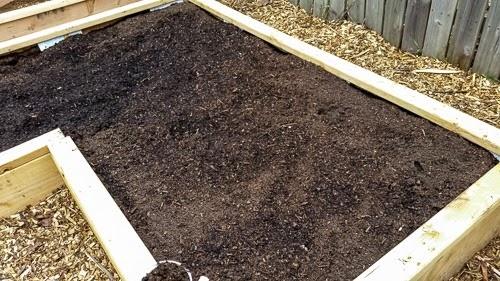 Planting Sunchokes