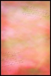 Breezy Pink Lyrics