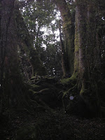 Border Ranges Camping Trip 002.JPG Photo