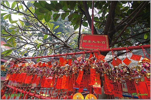 百年夫妻树