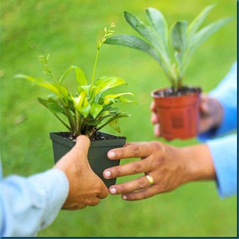 plant_swap