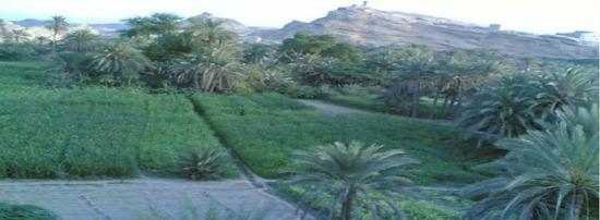 منظر من وادي لحج3 (3)