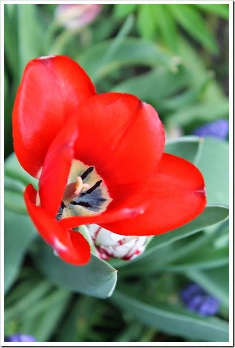 spring 2014 pics 022