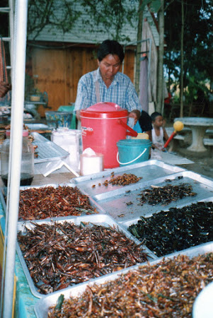 Mancare thailandeza: gandaci de mancare.jpg