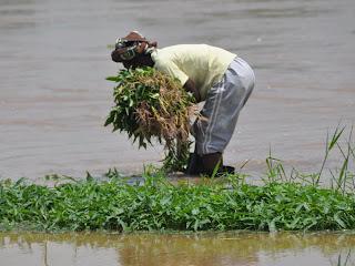 Une femme maraîchère à la périhpérique de la ville de Kinshasa (RDC).