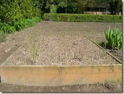 asparagus patch 4-28