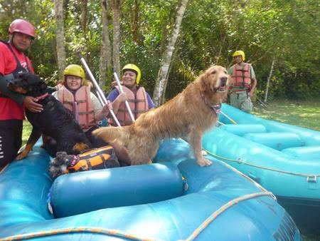 Pets Adventure 14 (17)
