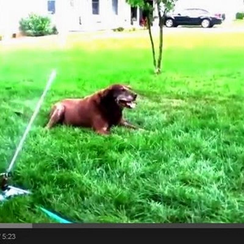 Σκύλοι Vs. Εκτοξευτήρες