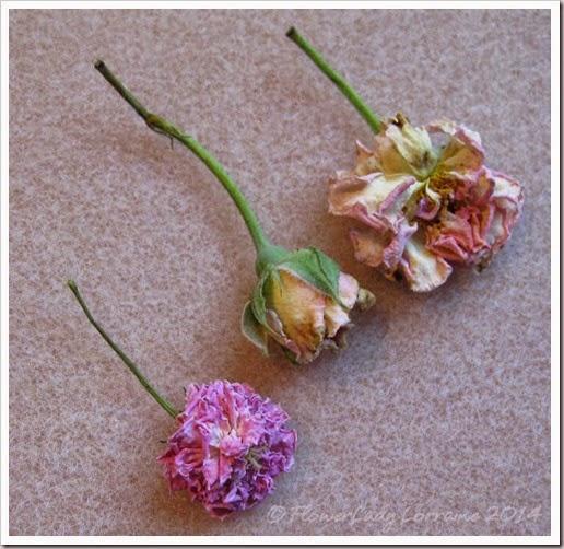 08-20-roses