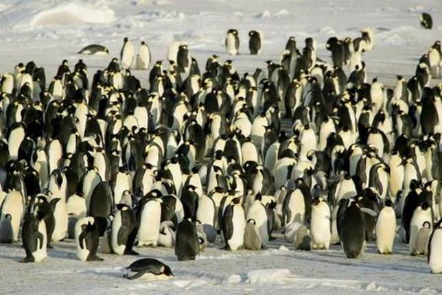 Antarctica beautiful pics