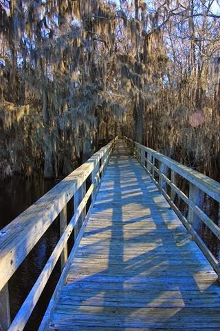 Boardwalk Manatee Springs