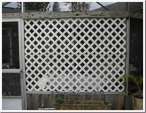 03-19-lattice2