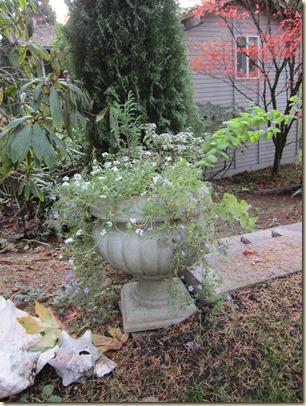11-15 flowers 1