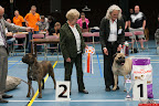 20130510-Bullmastiff-Worldcup-1298.jpg