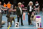 20130510-Bullmastiff-Worldcup-1298.jpg