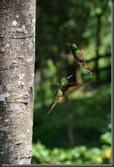 Salento - hummingbirds