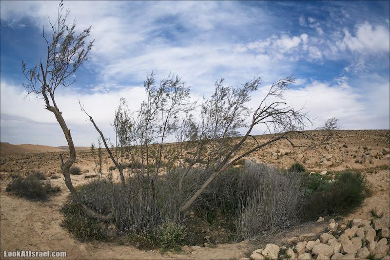 LookAtIsrael.com: Водоемы Луц (Борот луц) (israel путешествия пустыня природа негев )
