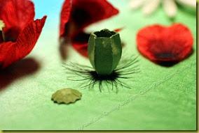Коробочка для цветка мака