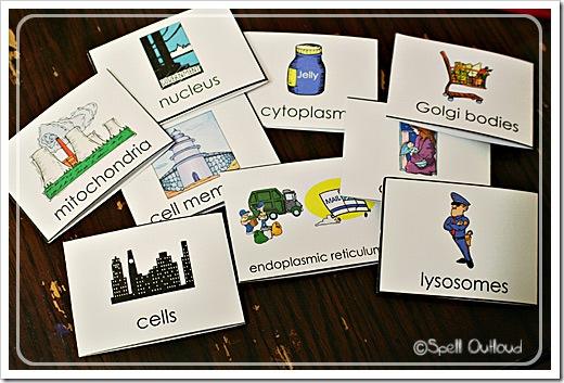 cellflashcards2