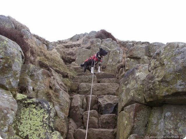 lucky up a steep bit
