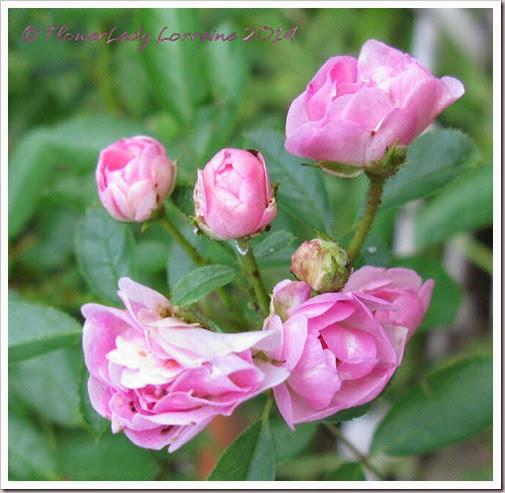 06-30-noid-pink-mini