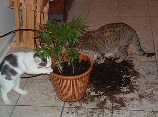 Коты-огородники