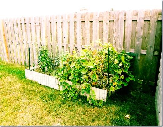 Garden 9-11