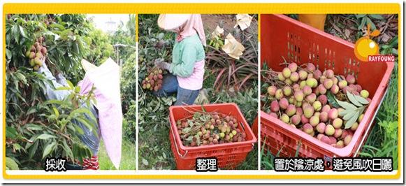 玉荷包栽種過程