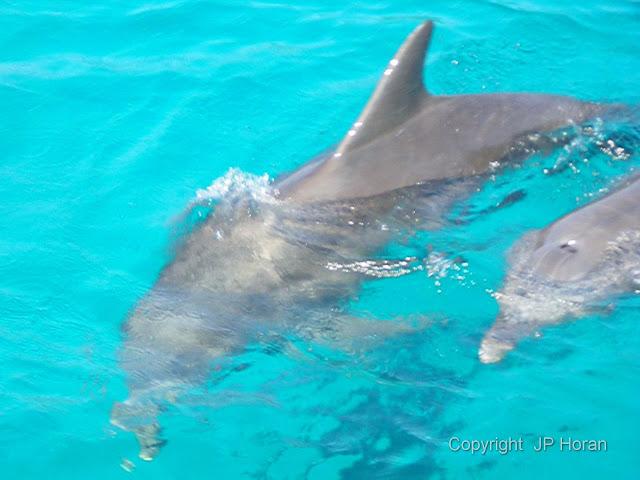 Buck Island Reef - IMGP3797.JPG