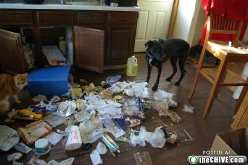 Опорожнил мусорное ведро