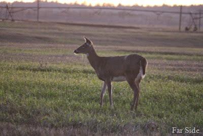 Deer October 20