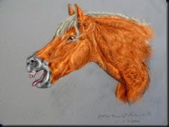 horse005