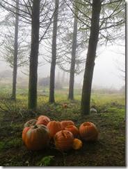 pumpkin shoot 02