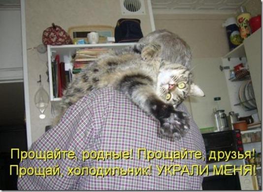 1361559288_novye-kotomatricy-12