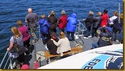 141030 082 Eden Whale Watching