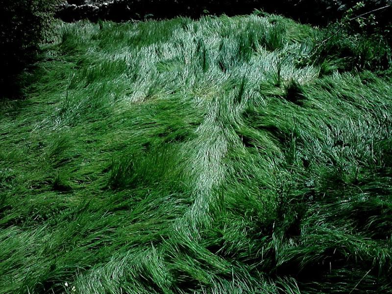cabellera verde