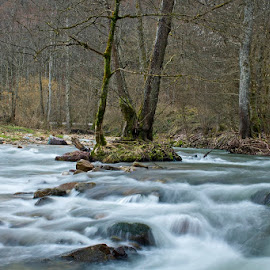 by Siniša Almaši - Landscapes Waterscapes ( water, tree, nature, forest, view, landscape, light, woods, river )