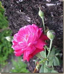 09-11-louis-philippe