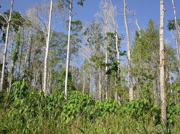 hutan musim